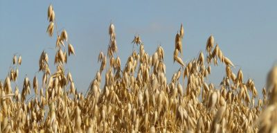 Oats Blog from Superioats - Latest news and views of what